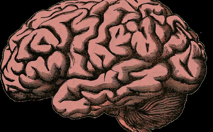 Neuroscience of Learning/Language Acquisition – Neurociência da Aprendizagem/Aquisição de SegundaLíngua