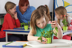 girl-learning-plants-school-class-22777346