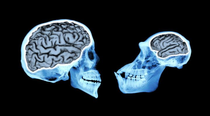 No, we don't just use 10% of ourbrain